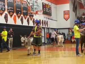 Donkey Basketball. Photo by Lauren Leone-Cross.