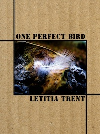 oneperfectbird.jpg