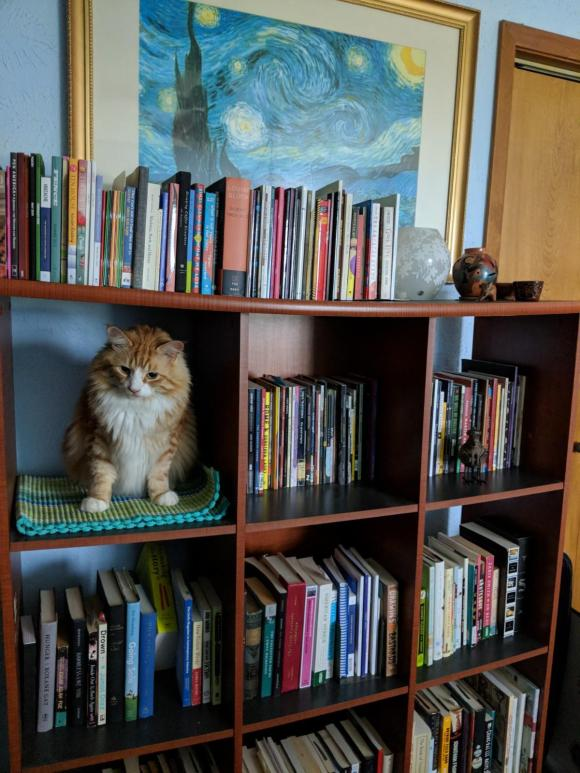 lauravillareal shelf
